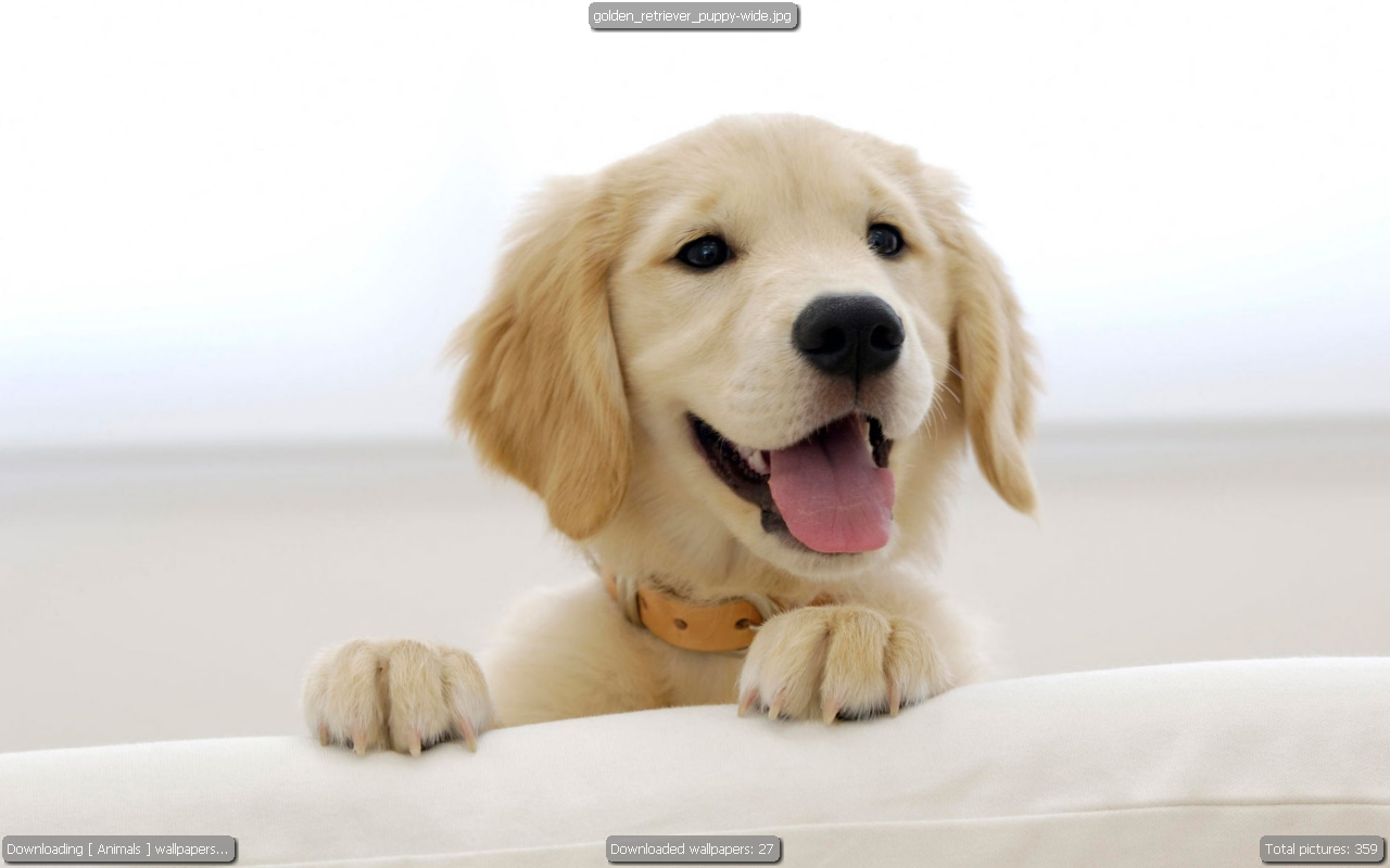 Wallpaper downloader -  Downloading And Showing Animals Wallpapers
